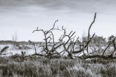 Kalmthoutse-Heide-4574
