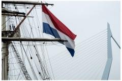 102 jj Rotterdam zwaan