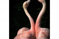 63 jj flamingos