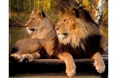 64 jj leeuwen