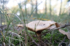 Rien paddenstoelen-2 (Large)