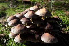 Rien paddenstoelen-3 (Large)
