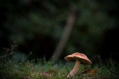 martijn paddenstoelen-21 (Large)