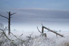 Kalmthoutste heide - winter - 25 (1 van 1) verkleind