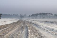 Kalmthoutste heide - winter - 30 (1 van 1) verkleind